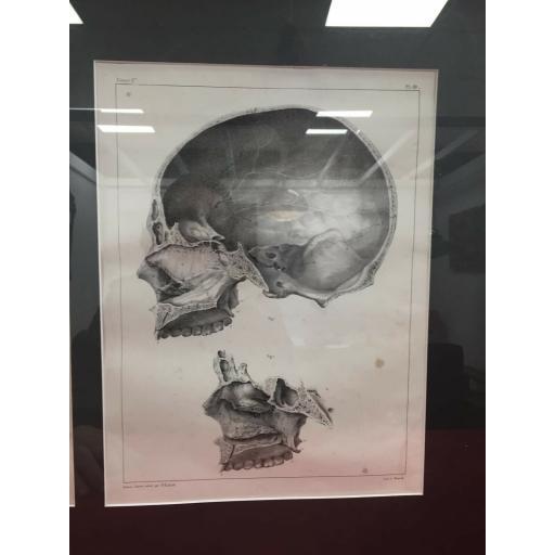 anatomy 4.jpg