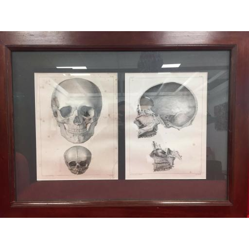 anatomy image 1.jpg